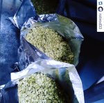Rob the Brewer posts a helping of hops used in the Black IPA.